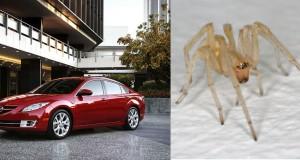 Mazda spiders